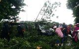 Gió to kèm theo mưa lớn trước bão số 10, nhiều cây bị gãy đổ ở Huế