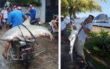 Làm rõ thông tin cá mập xuất hiện ở vịnh Hạ Long