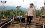 Thủ tướng yêu cầu điều tra, làm rõ phản ánh phá rừng phòng hộ ở Quảng Nam