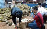 Tối nhúng sầu riêng vào phân bón lá, sáng mang đi bán