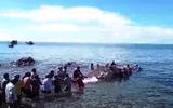 Phát hiện xác cá Ông dài hơn 13 m ngoài biển Nam Du