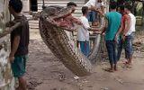 Người đàn ông hạ gục con trăn khổng lồ dài 7 mét, cứu sống 2 mạng người