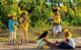 Sắp đến lễ hội hoa dã quỳ: Cùng ngắm cảnh tuyệt đẹp của những cung đường ngập hoa
