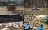 Toàn cảnh đợt lũ lụt lịch sử qua những con số