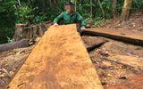 Phá rừng, nguyên trưởng công an xã bị khởi tố