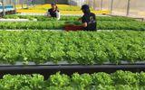 Vườn rau hữu cơ cho thu nhập 350 triệu/tháng của đạo diễn trẻ