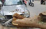 Cây xanh Hà Nội bất ngờ gãy đổ, đè bẹp 1 ô tô và 3 xe máy