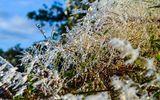 Cao Bằng: Băng tuyết phủ trắng đỉnh Phia Oắc