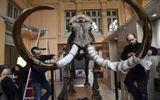 Chi gần 15 tỷ đồng để mua bộ xương voi ma mút trang trí sảnh công ty