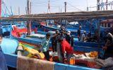 Bão số 16 khiến nhiều tàu đánh bắt cá ngừ đại dương thua lỗ nặng