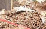 Di dời xong 6 tấn đầu đạn trong bãi phế liệu ở Hưng Yên