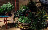 Những chậu cây xanh đẹp tuyệt giúp nhà bạn đầy sức sống