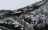 Tuyết rơi ở Sa Pa