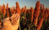 Trung Quốc mở cuộc điều tra nông sản nhập khẩu