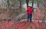 Dự báo thời tiết ngày 12/2: Miền Bắc rét 11 độ, Nam Bộ nắng ấm ngày 27 Tết