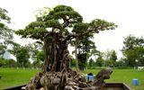 Những cây cảnh triệu đô của đại gia Việt
