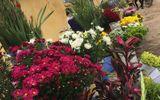 """Người bán hoa khóc ròng vì khách đợi 30 Tết mới… """"chơi"""" hoa"""