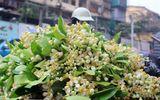 Hoa bưởi đầu mùa 200.000 đồng/kg hút khách Hà thành