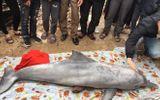 Cá heo trắng chết dạt vào bờ ngày vía Thần tài, người dân tới sờ đầu cá lấy may