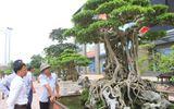 Sững sờ trước vẻ đẹp của hàng nghìn cây cảnh tiền tỷ tại Hà Nội