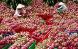 Cảnh báo việc thương lái Trung Quốc lùng mua nông sản Việt