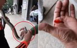 Video: Trêu rắn, người đàn ông bị rắn cắn chảy máu tay