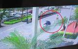 Video: Cẩu tặc táo tợn cướp chó trước sảnh chung cư ở Hà Nội