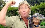 """""""Người săn cá sấu"""" quá cố bất ngờ được vinh danh trên Đại lộ Danh vọng Hollywood"""