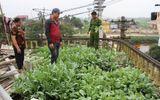 Hưng Yên: Phát hiện hơn 100 cây thuốc phiện trong nghĩa trang