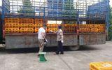 Tiêu hủy 1,1 tấn gà lậu Trung Quốc