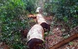 """Gia Lai: Kỷ luật 5 cán bộ vì để """"mất rừng"""" tại Kbang"""