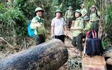 Quảng Nam: Xử lý kỷ luật, cách chức hàng loạt cán bộ kiểm lâm để mất rừng