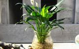 Hé lộ 4 loại cây nên trồng trong nhà để lọc không khí