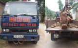 Thuê xe cẩu trộm cây mít trị giá 40 triệu đồng