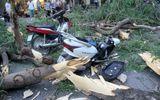 Hà Nội: Cây cổ thụ bỗng đổ kinh hoàng, xe đè bẹp, 5 người bị thương