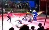 Clip: Kinh hoàng gấu nổi điên tấn công huấn luyện viên khi đang diễn xiếc