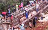 Video: Xe chở hơn 100 con lợn bị lật, người dân đua nhau đến hôi của