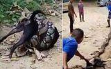Video: Chú chó bị trăn lớn siết chặt may mắn được người dân giải cứu