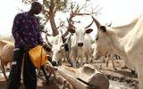 Nigeria: Bạo lực đẫm máu do tranh chấp đất đai, ít nhất 86 người thiệt mạng