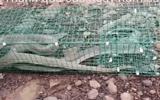 Video: Rắn độc dài gần 2 mét sập bẫy khi đi ăn mồi trong bãi cỏ