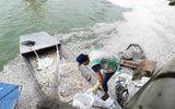 Tin tức thời sự 24h mới nhất ngày 10/7/2018: 25 tấn cá chết ở Hồ Tây, cơ quan chức năng nói gì?