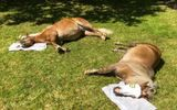 """Spa """"sang chảnh"""" dành cho ngựa: Đắp mặt nạ, tắm nắng, massage như người"""
