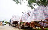 """Tình tiết bất ngờ vụ xe chở cây """"khủng"""" bị CSGT tỉnh Quảng Ngãi tạm giữ"""