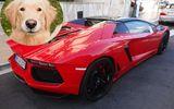 Chú chó gây tai nạn cho siêu xe Lamborghini triệu đô và cái kết bất ngờ