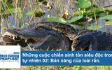 """Bản năng sinh tồn đặc biệt của rắn - """"sát thủ máu lạnh"""" rừng già"""