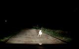 Video: Giật bắn người khi thấy bé trai chạy qua đầu ô tô trong đêm