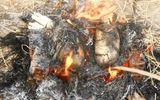 """Nướng vịt ăn trưa người nông dân làm """"cháy"""" mất 88,2 triệu đồng"""