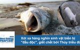 """Video: Xót xa hàng nghìn sinh vật biển bị """"đầu độc"""" bởi thủy triều đỏ"""