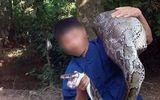 """Người dân Lạng Sơn bắt được con trăn """"khủng"""" dài 3m nuốt dê 15kg"""