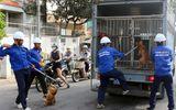 Bắt nhiều chó thả rông giữa trung tâm Sài Gòn